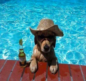 Cool Dog in the Pool