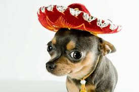 take your pet to mexico